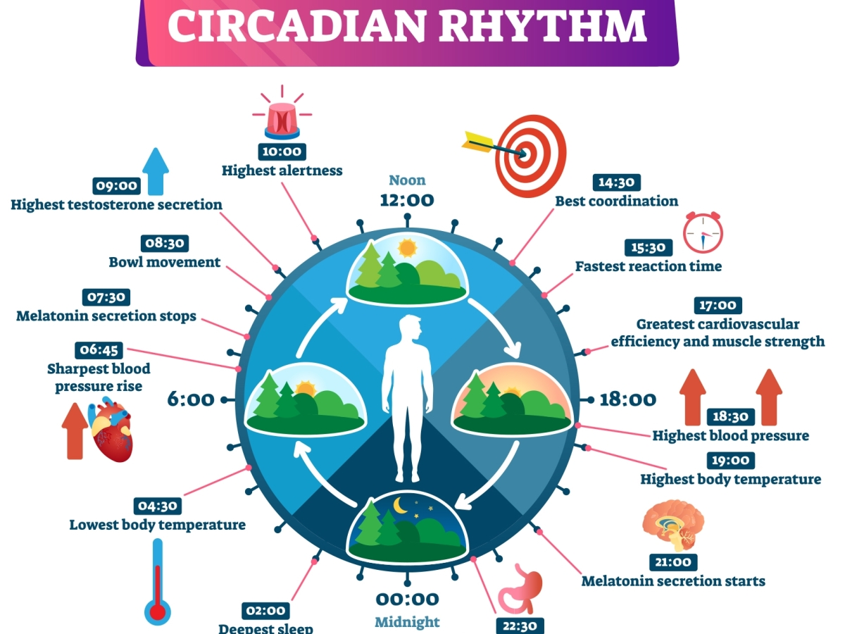 circadian rhtym